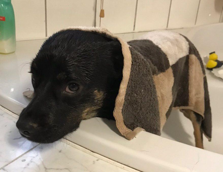 Wasser marsch – Oskar in der Badewanne