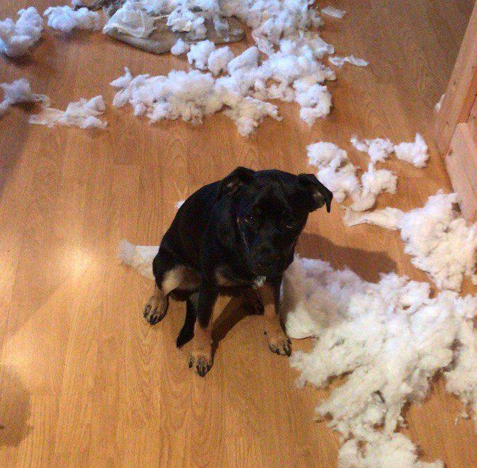 Hund und Haftpflicht